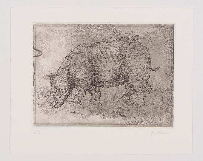 engraving rhinoceros art estampe impression