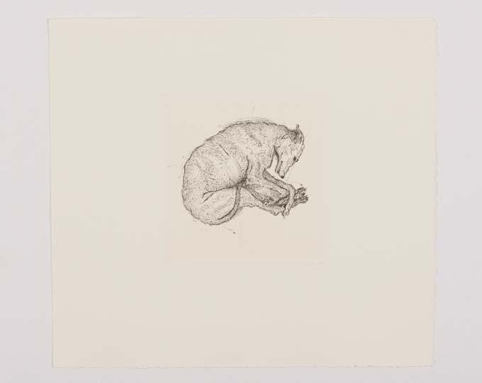 gravure levrier greyhound engraving etching