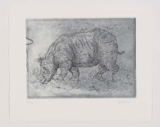 rhinoceros gravure durer eau-forte