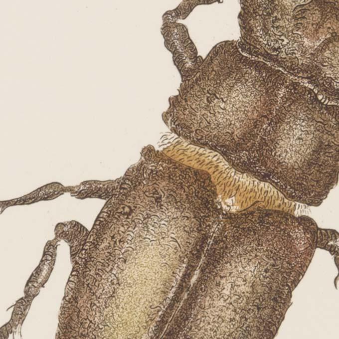 insecte-aquatinte-gravure-couleur-tank-atelier-detail01