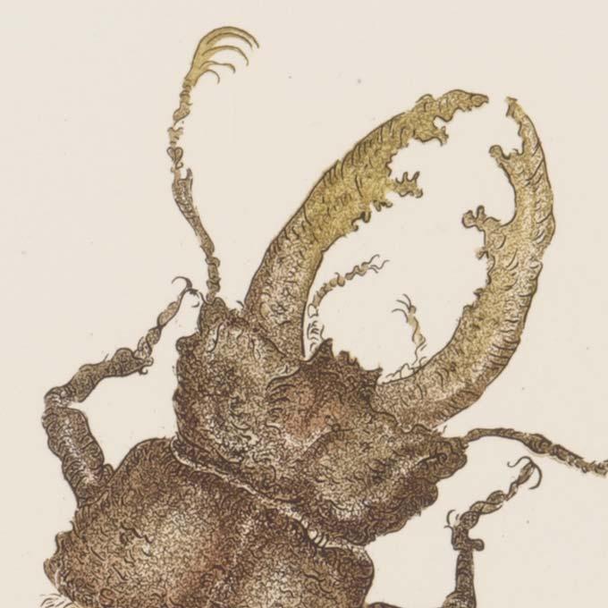 insecte-aquatinte-gravure-couleur-tank-atelier-detail02